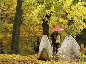 Киевские власти объявили 84 дерева памятниками природы