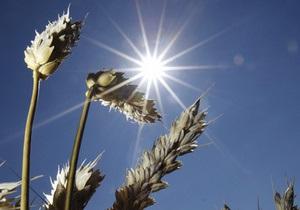 Ученые вывели пшеницу, устойчивую к солевому стрессу