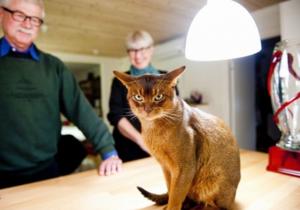 В Польше выбрали самого красивого в мире кота