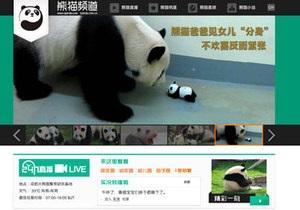 Новости китая - новости о животных: iPanda. Китайцы смогут круглосуточно наблюдать за пандами в сети
