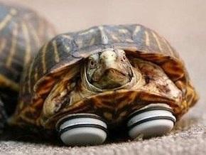 Черепахе сделали протезы из подставок для мебели