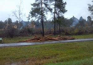 В ночь выборов неизвестные вырубили 10 гектаров Быковнянского леса