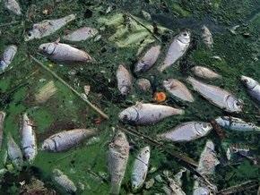 Африканское озеро Виктория заросло водорослями, убивающими рыбу