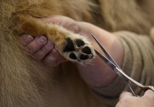 После отказа стричь собаку житель Казахстана пригрозил парикмахеру игрушечным пистолетом