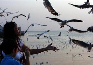 Ученые установили, каким образом птицы в стае принимают решение о приземлении