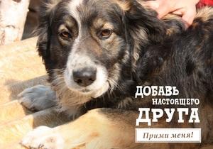В Facebook стартовала акция помощи киевским бездомным собакам