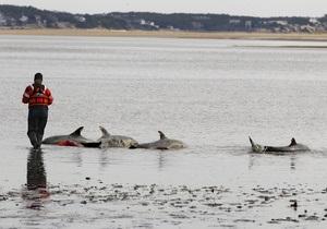 С начала года на северном побережье Перу погибли почти 900 дельфинов