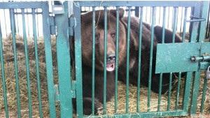 В Украине открывается реабилитационный центр для медведей
