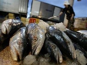 В Днепре возле Киева быстрыми темпами уменьшается количество рыбы