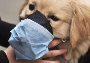 В США впервые зарегистрирован случай заболевания гриппом H1N1 домашней собаки