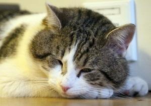 В Эстонии кошка, запертая в электрощите, обесточила квартиру