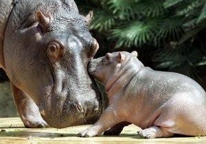 В Киевском зоопарке утеплили вольеры для животных