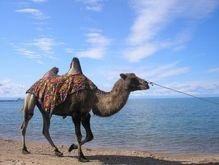 В Сирии обнаружили останки миниатюрного верблюда