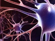 Ученые раскрыли секрет омоложения нервных клеток