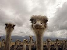 Французы нашли останки страуса возрастом 56 млн лет