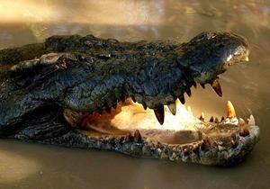 В Австралии французский рыбак отбился от прикусившего ему голову крокодила