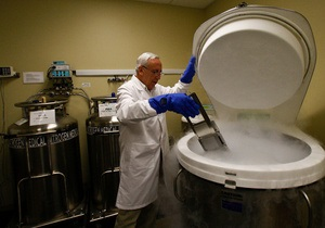 Новости науки - стволовые клетки: Американские ученые впервые вырастили кости из стволовых клеток
