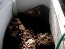 Американские охотники обнаружили труп йети