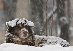 Власти Киева заверили международных зоозащитников, что решают проблему бездомных животных гуманными методами