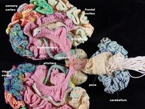 В США психиатр за год связала из разноцветной пряжи мозг