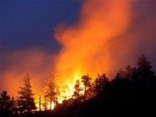В Луганской области сгорело 250 га заповедника