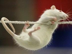 В больнице под Москвой крыса покусала двух младенцев