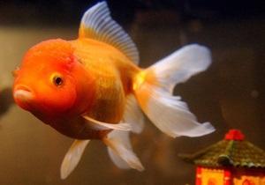 Британский  отель предлагает одиноким постояльцам забронировать золотую рыбку для компании