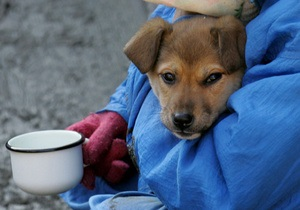 В 2010 году в Киеве появятся новые приюты для бездомных животных