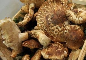 В Житомирской области пять человек отравились грибами
