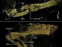У древней змеи обнаружили ногу