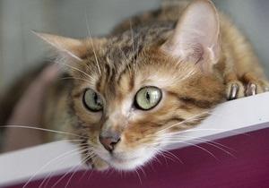 Россиянин потратил 30 тысяч евро на некролог коту в итальянском издании