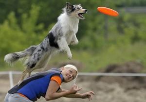 Фотогалерея: Собаки учатся летать. Чемпионат Венгрии по дог-фризби