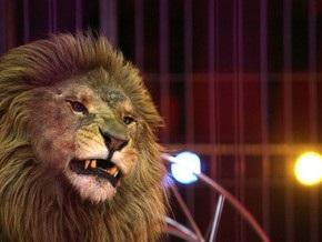 В Германии воры угнали фургон с цирковым львом