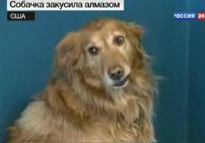 Собака, проглотившая бриллиант за $20 тысяч, вернула его естественным путем