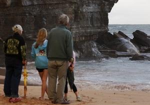 На пляж в Сиднее вынесло мертвого кашалота