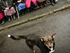 СМИ: В Киеве появились частные фирмы, занимающиеся отловом собак