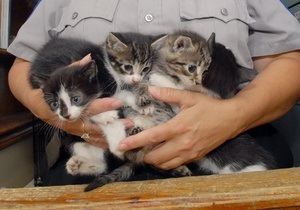 Во Флориде  команду саперов вызвали для обезвреживания коробки с котятами