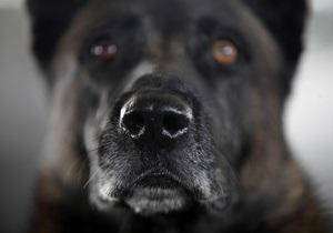 В России осужден мужчина, два километра тащивший собаку за автомобилем