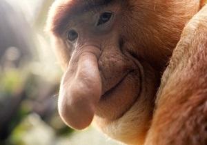 Януковичу в Брунее подарили длинноносую обезьяну
