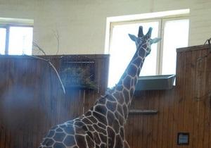 В киевском зоопарке установили первые камеры видеонаблюдения