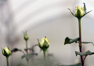 В Киеве появится клумба с французскими розами