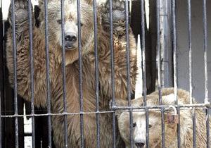 Киевскому зоопарку на подготовку к зиме выделят 2,5 млн грн - заместитель главы КГГА