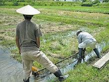 Цены на рис побили исторический рекорд