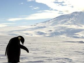 Появилась угроза для популяции императорских пингвинов