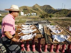 Фотогалерея: Заготовка собачьего мяса в Китае