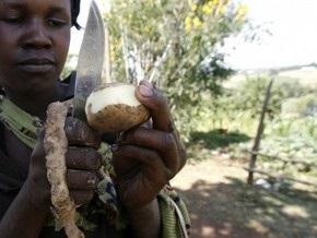 Ученые расшифровали геном картофеля на 95%
