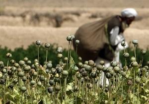 Афганцы, отказавшиеся от выращивания опийного мака, переключились на коноплю