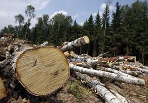 В Химкинском лесу возобновили вырубку деревьев