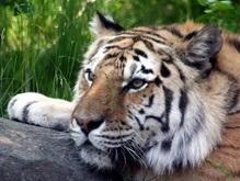 BBC сокращает финансирование программ о дикой природе