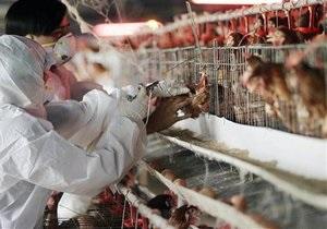 Птичий грипп: В Мексике вакцинируют 200 млн домашних птиц